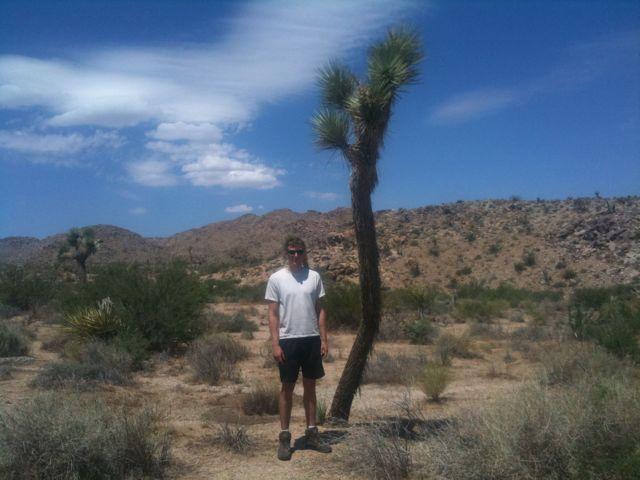 famed Joshua Tree